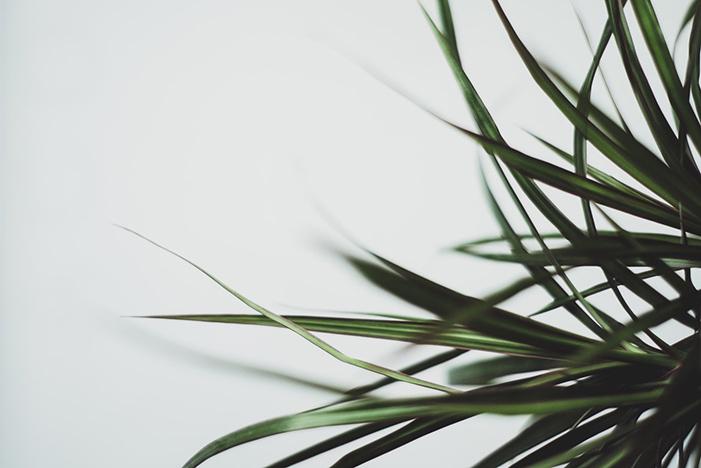 plantas que absorben calor